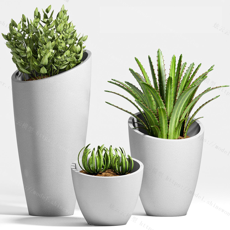 植物盆栽植物花草现代植物现代盆栽模型