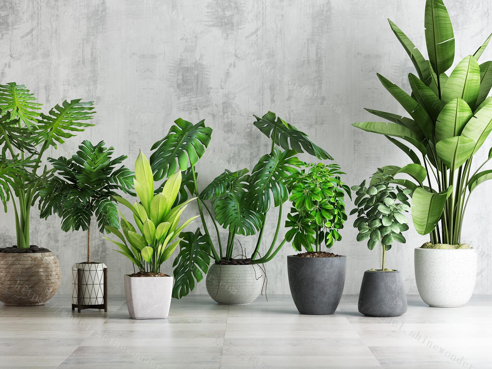 植物盆栽绿植组合模型